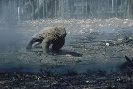 Komodo zmajevi