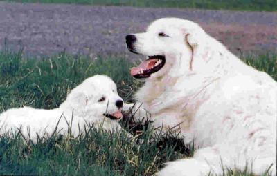 kako hraniti psa
