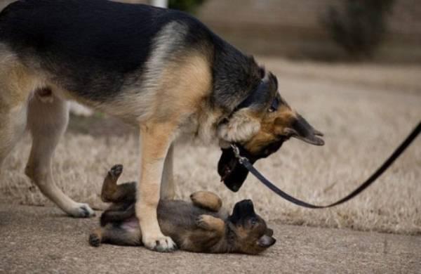 Psi su veoma inteligentne životinje