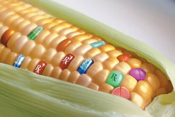 sta je genetski modifikovana hrana