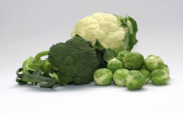 hrana bogata vitaminom k