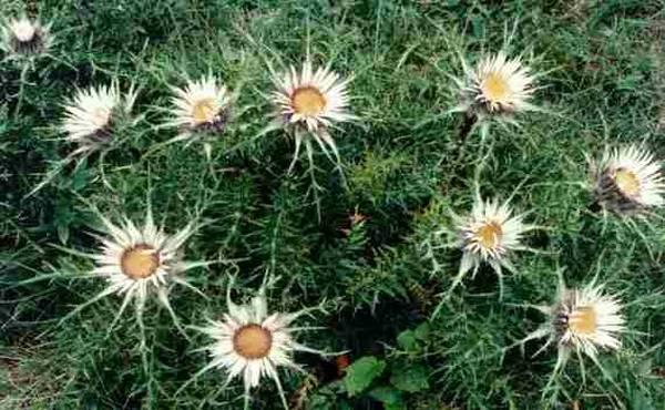 zanimljive biljke