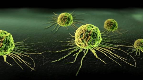 Hrana u prevenciji kancerogenih oboljenja
