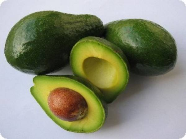 avokado hrana