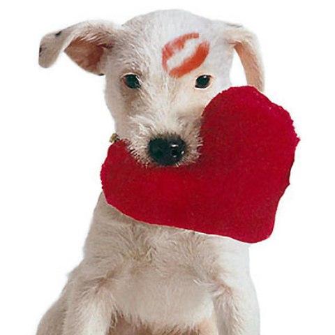 Kućni ljubimac može biti poklon za voljenu osobu
