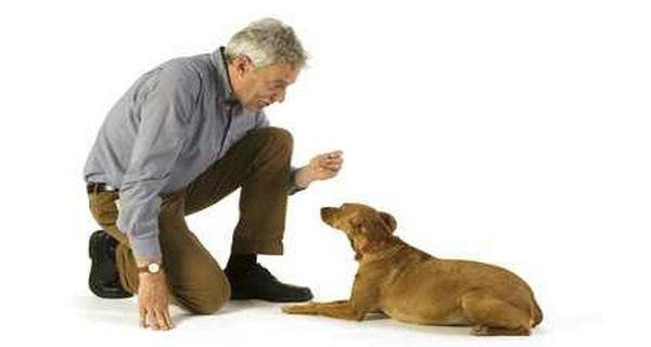 Kako disciplinovati psa