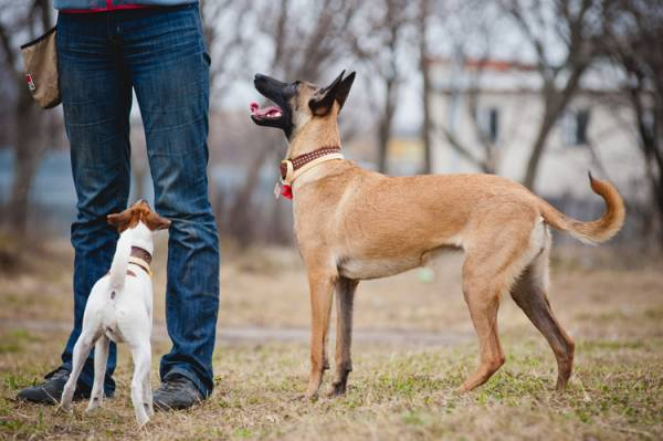 Kako nauciti psa da dodje