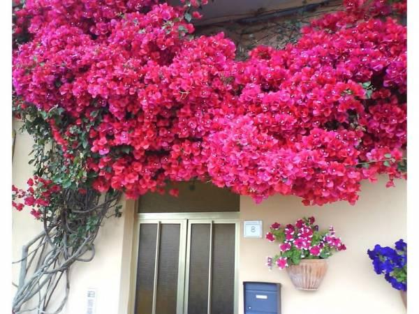 bogumila cvetovi u basti