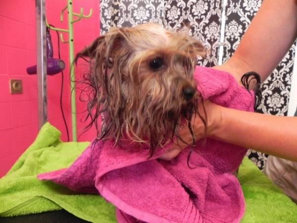 kupanje pasa
