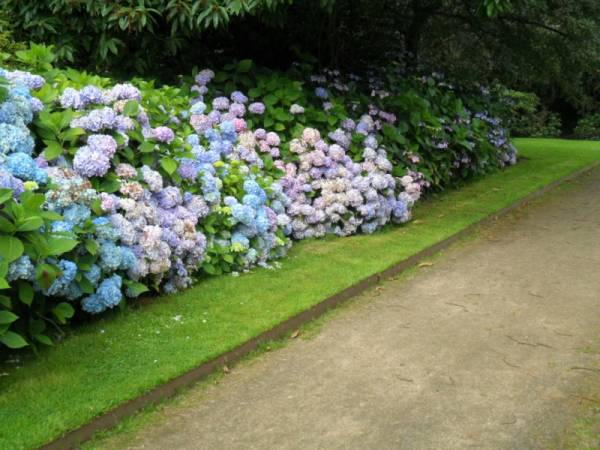 najlepse bastensko cvece hortenzija