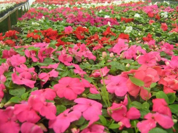 prolecno cvece za dvoriste