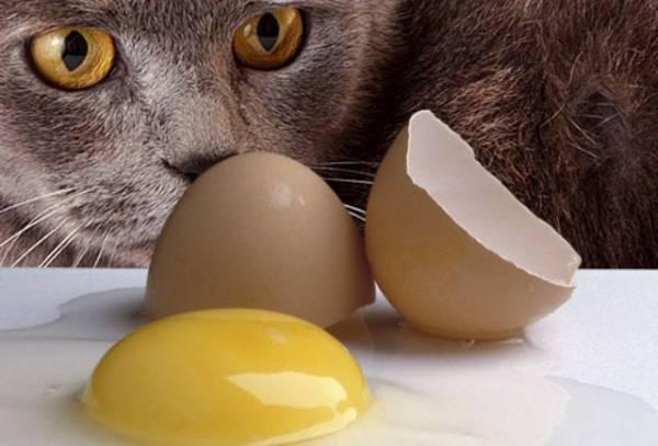 I mačke poput ljudi mogu da obole od salmonele.
