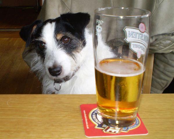 Alkohol je, već, štetan i za ljude, a kamoli za pse.