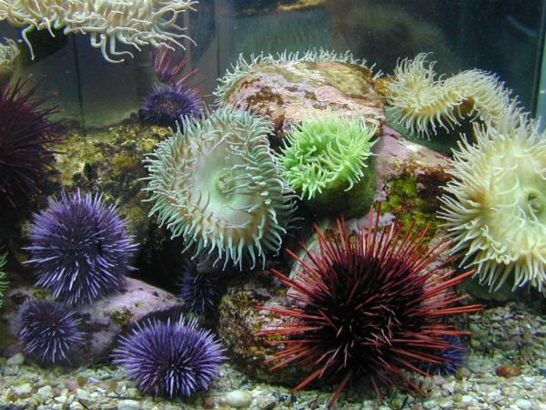 ubod morskog jeza
