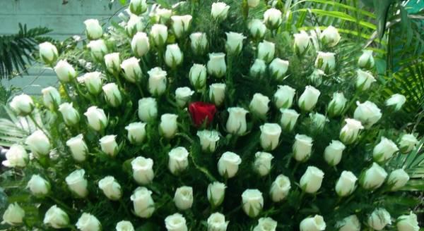 101 ruža
