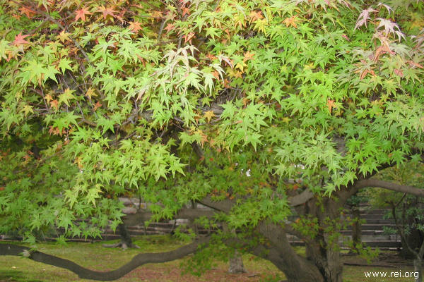 jesenje boje