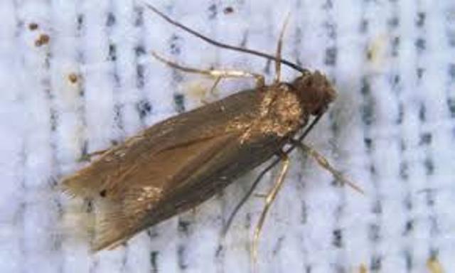 Uništavanje moljaca