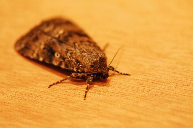 moljci u kupatilu